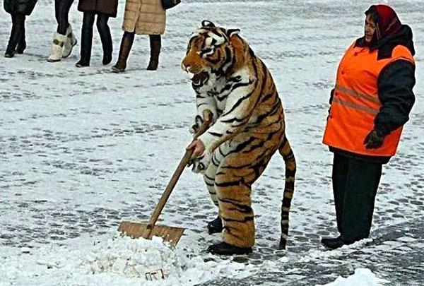 человек в костюме тигра убирает снег